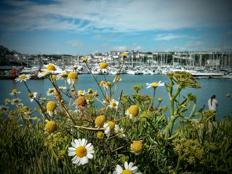 brixham-plants